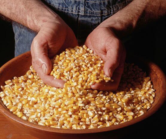 агрокомпания Seed Grain